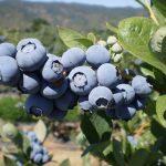 Wohlschmeckend und aus Paraguay