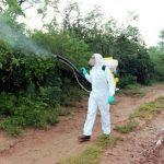 Heuschreckenplage: Notstand für Boquerón gefordert