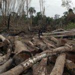 Paraguay ist der Champion in der Entwaldung
