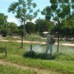 Heuschreckenplage: Sprühaktion im Chaco