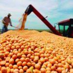Entscheidung der Regierung erschwert Soja- und Getreideernte