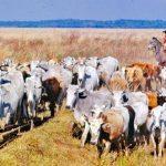 Eine Warnung für Viehdiebe