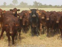 Chaco: Wo Weideland am teuersten ist