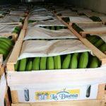 Paraguay, ein Bananenland