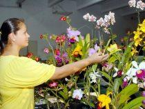 """""""Orchideen anbauen, Frauen stärken"""""""