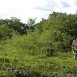 Landkonflikt über 80.000 Hektar im Chaco
