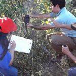 Kamerafallen im Chaco