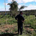 Unfassbar: Marihuana-Produzenten fordern Entschädigung wegen zerstörter Felder