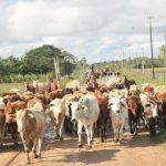 Das Leid der Milch- und Käseerzeuger