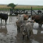 Regenfälle schwächen das BIP