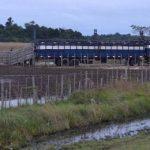 Drastischer Einbruch im Viehsektor