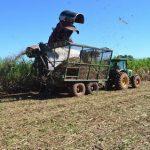 Zufriedene Zuckerrohrbauern