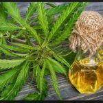 Cannabisöl verschenkt: Haftstrafe aufgehoben
