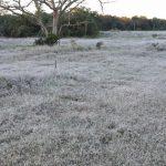 Frostwarnung für acht Departements