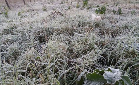 Extremes Wetter: Hitze und jetzt wieder Frostwarnung