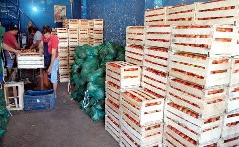 Preise für Tomaten im freien Fall