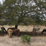 Uruguayer besitzen etwa 2 Millionen Hektar Land im Chaco