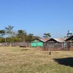 Viehdiebe erschießen Schafzüchterin