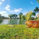 Das letzte Schwein kommt nach Independencia