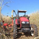 Das Zuckerrohr im Aufwärtstrend