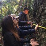 In Paso Yobai und Independencia auf der Suche nach den größten Bäumen