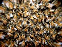 Das Geheimnis glücklicher Honigbienen