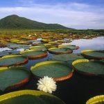 Paraguayisches Pantanal soll UNESCO Erbe werden