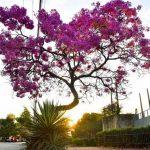 Es soll ein Wahrzeichen von Paraguay werden