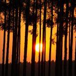 Digitale Plattform zur Überwachung des Waldbestandes
