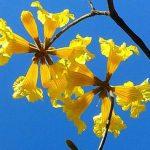 Die Vorboten des Frühlings