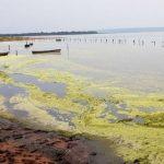 Schon jetzt grüne Algen im Ypacaraí See