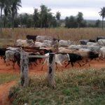Doppelmord auf einer Estancia im Chaco