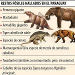 Fund von Fossil sorgt für Aufsehen