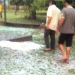 Hagelschlag zerstört Sojakulturen
