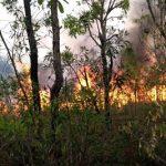 Eine ökologische Katastrophe bahnt sich an