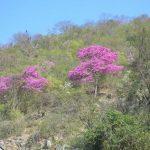 Wunderbare Natur aber auch Sorgen im Chaco