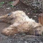 Rund ein Dutzend Hunde vergiftet