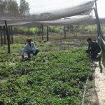 Nach 26 Jahren erhalten Siedler Grundstücke zugewiesen