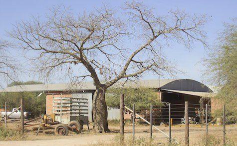 Covid-19: Erster Fall im zentralen Chaco registriert