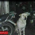 Hund beißt zweijährigen Jungen tot