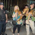 Hunde und Schildkröte aus den Fängen eines Koreaners befreit