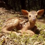 Bambi Nachwuchs im Zoologischen Garten