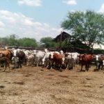 Misslungener Viehdiebstahl im Chaco