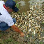 Ermittlungen wegen großem Fischsterben