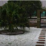 Schnee unter Palmen
