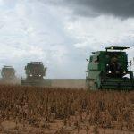 Die Sojaproduktion dürfte nächstes Jahr einbrechen