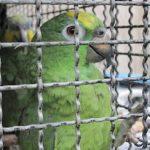 Wie man legal zu einem Papagei kommt