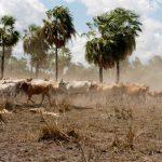 Missionare im Chaco kritisieren scharf Grundstücksbesitz durch Ausländer