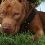 Hund greift an: Verletzter sticht aus Vergeltung Besitzer nieder
