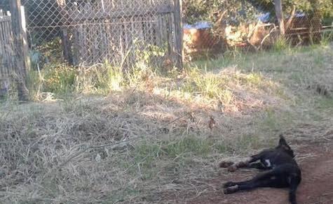 Hunde: Städtische Verordnung sorgt für Entrüstung